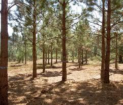 نحوه استفاده از زمین و منابع ملی در مناطق آزاد