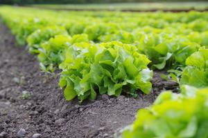 گواهی بهداشت گیاهی صادرات