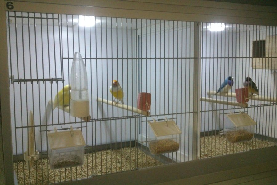 هزینه صدور مجوز مرکز پرورش پرندگان