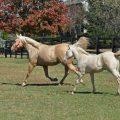 پروانه بهره برداری پرورش اسب