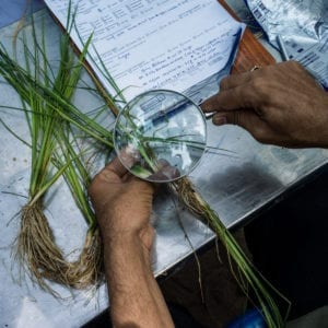 مدارک اخذ مجوز کلینیک گیاهپزشکی