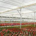 گواهی تاییدیه فنی سازه و تجهیزات گلخانه