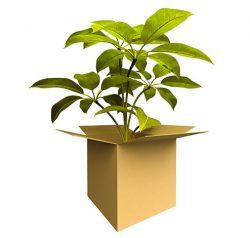 مجوز خروج محموله های گیاهی از گمرک