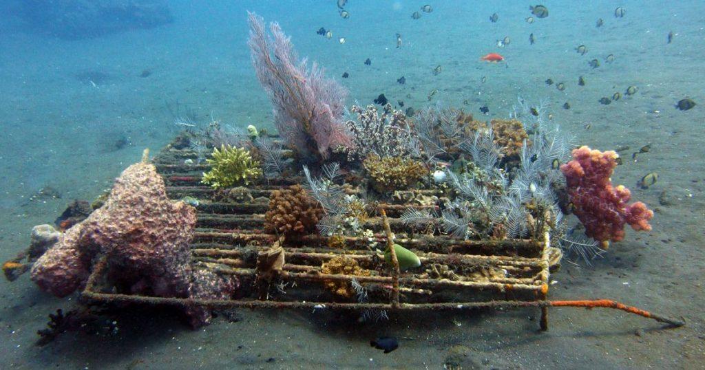 مجوز کاشت و پرورش مرجان